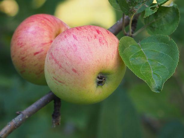 Hallinnon hedelmiä - tapaturmavakuutus?
